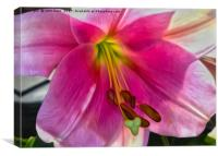 Lily (Digital Art), Canvas Print