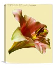 Lily (Abstract Digital Art), Canvas Print