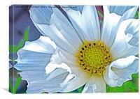 Cosmos Hummingbird white (Digital Art), Canvas Print