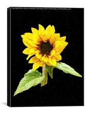 Painted Sunflower, Canvas Print