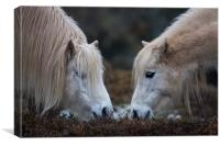 horse love, Canvas Print