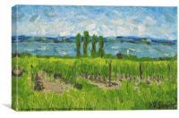 Italian Vineyard, Canvas Print