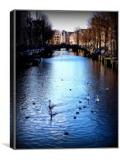 Swans in Amsterdam, Canvas Print