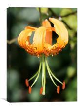 Orange Flower, Canvas Print