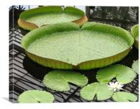 Giant lily pad, Canvas Print