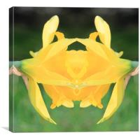 Yellow flower abstract, Canvas Print