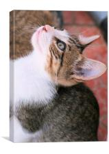 Tabby Kitten 9, Canvas Print