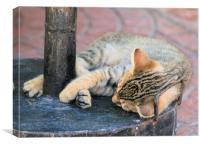 Tabby kitten 12, Canvas Print