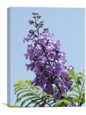 Purple flower 2, Canvas Print