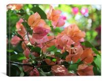 Bougainvillea Pink flower 2, Canvas Print