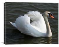 Swan 4, Canvas Print