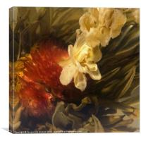 Jasmine Tea Flower, Canvas Print