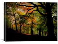 IN THE WOODS, Canvas Print