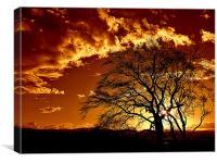 burn''in tree, Canvas Print