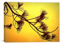 beautifull in yellow, Canvas Print