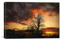 evening woods, Canvas Print