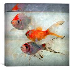 3 amigo's , Canvas Print