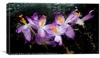 colorful closeup flora, Canvas Print