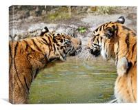 Tigers, Canvas Print