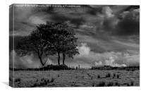 Lonely Trees, Canvas Print