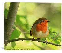 Robin Red Breast, Erithacus rubecula, Canvas Print