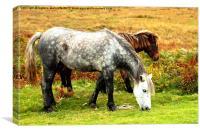 Exmoor Ponies, Canvas Print