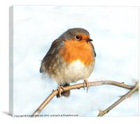 Mr Robin, Canvas Print