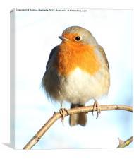 Pretty Little Robin, Canvas Print
