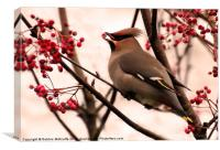 Waxwing and berries, Canvas Print