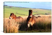 Ponies on Exmoor, Canvas Print
