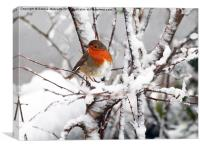 Robin in the snow, Canvas Print