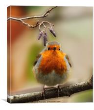 Robin & Twigs, Canvas Print