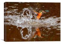 Kingfisher splash, Canvas Print