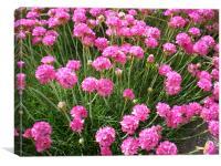 pink flowers., Canvas Print