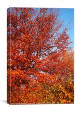 Fire Tree, Canvas Print