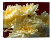 Chrysanthemums Close Up, Canvas Print
