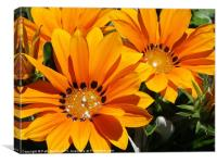 Starshine  Orange Glitter Daisy, Canvas Print