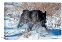Blue dog in the snow, Canvas Print
