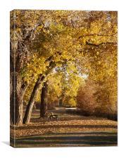 Fall Path, Canvas Print