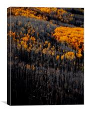 Just before winter forest in Colorado, Canvas Print