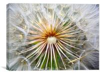 Dandilion Center, Canvas Print