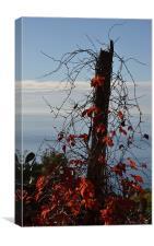 Fall in Liguria, Canvas Print