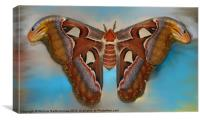 Giant Silk Moth, Canvas Print