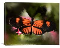 Black and Orange Butterfly, Canvas Print