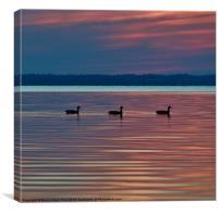 Ducks in a Row, Canvas Print