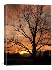 Sunset behind The Tree, Canvas Print
