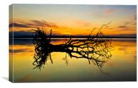 Loch Leven Tree Reflection, Canvas Print