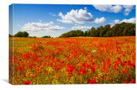 A field of poppies, Canvas Print