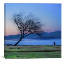 Tree on the Banks of the River Clyde, Canvas Print