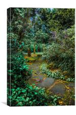 Woodland Walk in Rosshall Park ,Paisley, Canvas Print